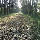 Autumn on Lord Leverhulme's avenue by photosbyDavid