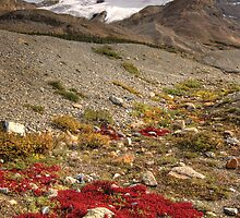 Mount Athabasca, Canada. by Philippe Widling