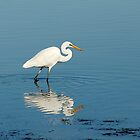 White Heron at Lake Illawarra by Barry Culling