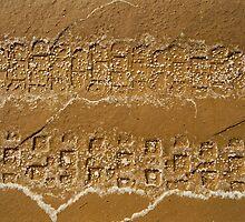 tyre tracks in salt lake by stillphotos