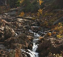 Sierra Fall by Barbara  Brown