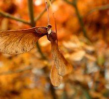 Flightless Bird I by myREVolution