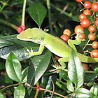 Have a Berry Merry Christmas-Anole-Pickin Berries in Nandina Bush, just kidding by JeffeeArt4u
