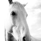 Grey Mare Portrait by Ula Zammit