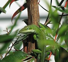 Anole Large by JeffeeArt4u