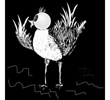 little bird Photographic Print