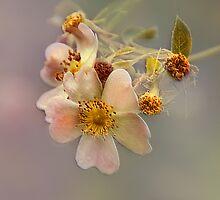 Peach Florelle  by Elaine  Manley