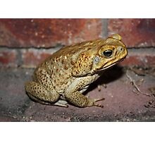 Evil Cane Toad Australia Photographic Print