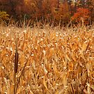 Fall Harvest by lroof