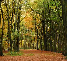A beech-tree lane in the autumnal paradise  by jchanders
