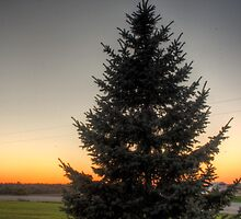 Evergreen at sunset hdr by Brad Denny Photography