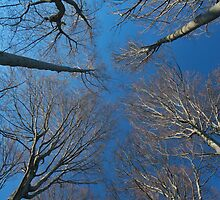 Tree branches in the sky. by demigod