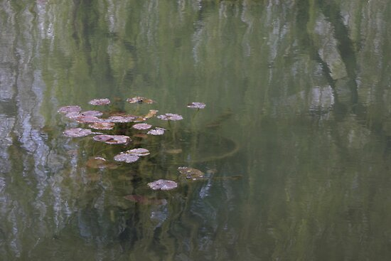 Waterlillies (Monet's Garden) by Richard Pitman