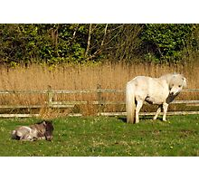 Let sleeping foals lie! Photographic Print