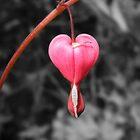 Love is a Flower by lisaluvz