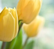 Yellow Tulips. by Victoria Penrose