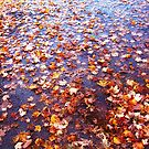Driveway Leaves by kmdphotog