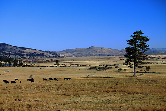 Washoe Valley by doubleheader