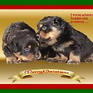 Rottweiler Puppy Christmas Wishes by taiche
