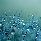 Blue Shower by Sharon Johnstone