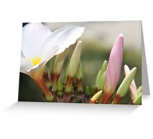 Plumeria Bloom Greeting Card