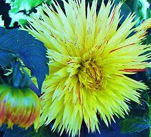 Flowers in Yachats, Oregon by trueblvr
