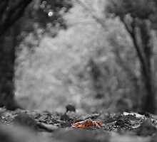 The Lonely Leaf by blueguitarman
