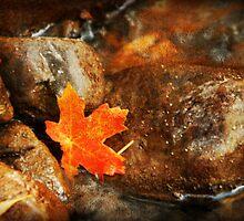 Red Maple Leaf by Ryan Houston