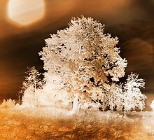 Negative sepia tree by Olav Lunde