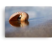 Beached Nautilus Canvas Print