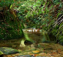 Coachwood Glen - Megalong Valley NSW by Bev Woodman