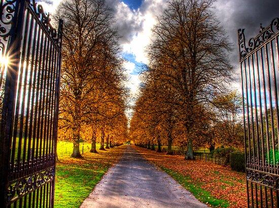 Autumn Colour by NeilAlderney