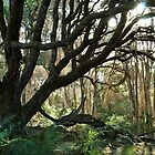 Among the Tea-Trees, Nurawntapu National Park by Kristi Robertson