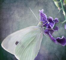 Flutterby by Louise Docker