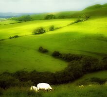 Glowing Sheep by Nigel Finn