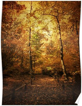 Golden Canopy by Jessica Jenney