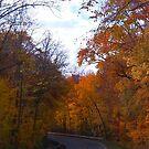 Autumn Drive by jpryce