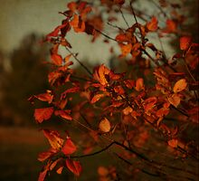 autumnal glow by olivepix