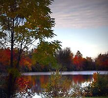 Pause To Reflect by jpryce