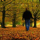 Autumn Walk by Martin Griffett