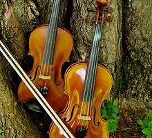 Violins and bows by Ben by Benevolent Society