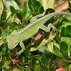 Anole Maneuvering by JeffeeArt4u
