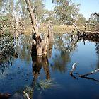 Serpentine (Loddon River) by Taylor Tran