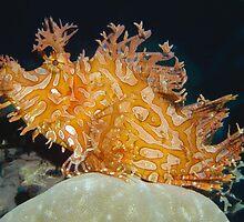 Weedy Scorpionfish, Papua New Guinea by Erik Schlogl