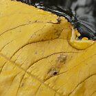 Yellow teardrop by ChristinaR