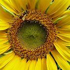 Pollen gatherer by ChristinaR