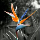 Bird of Paradise by Steven  Agius