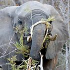 Elephant Fine Dining by Michael  Moss