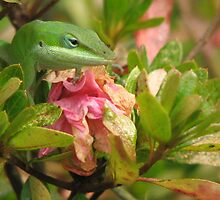 Anole Near Azalea Bloom by JeffeeArt4u