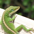 Branded Anole by JeffeeArt4u